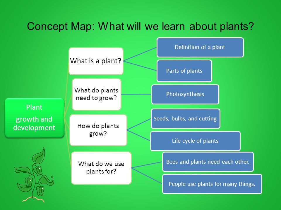 Plant growth development grade 2 ppt download for What do we use trees for