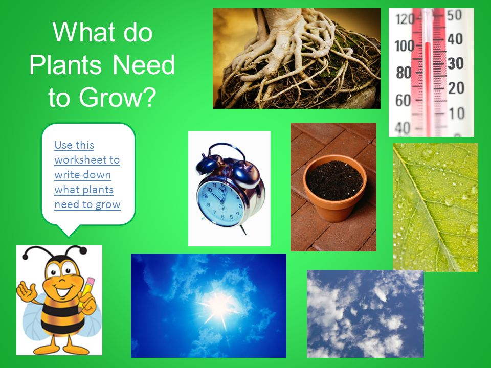 Plant Growth u0026 Development Grade 2 - ppt download