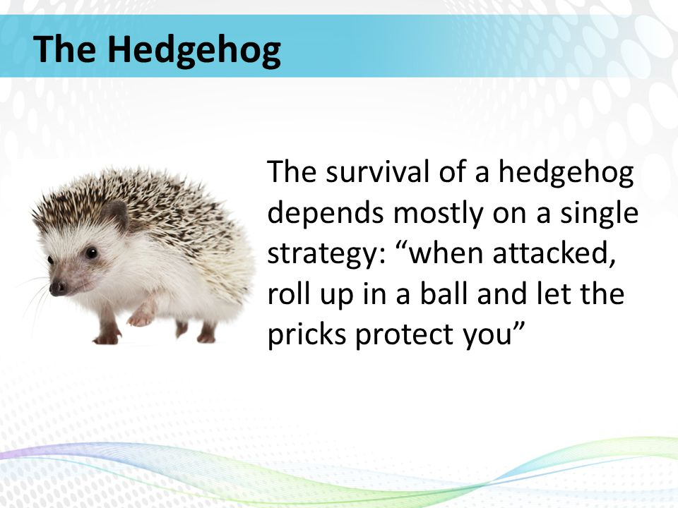 southwest airlines hedgehog concept Most companies overly complicate financial  most companies overly complicate financial management the best  what we came to call a hedgehog concept for their.
