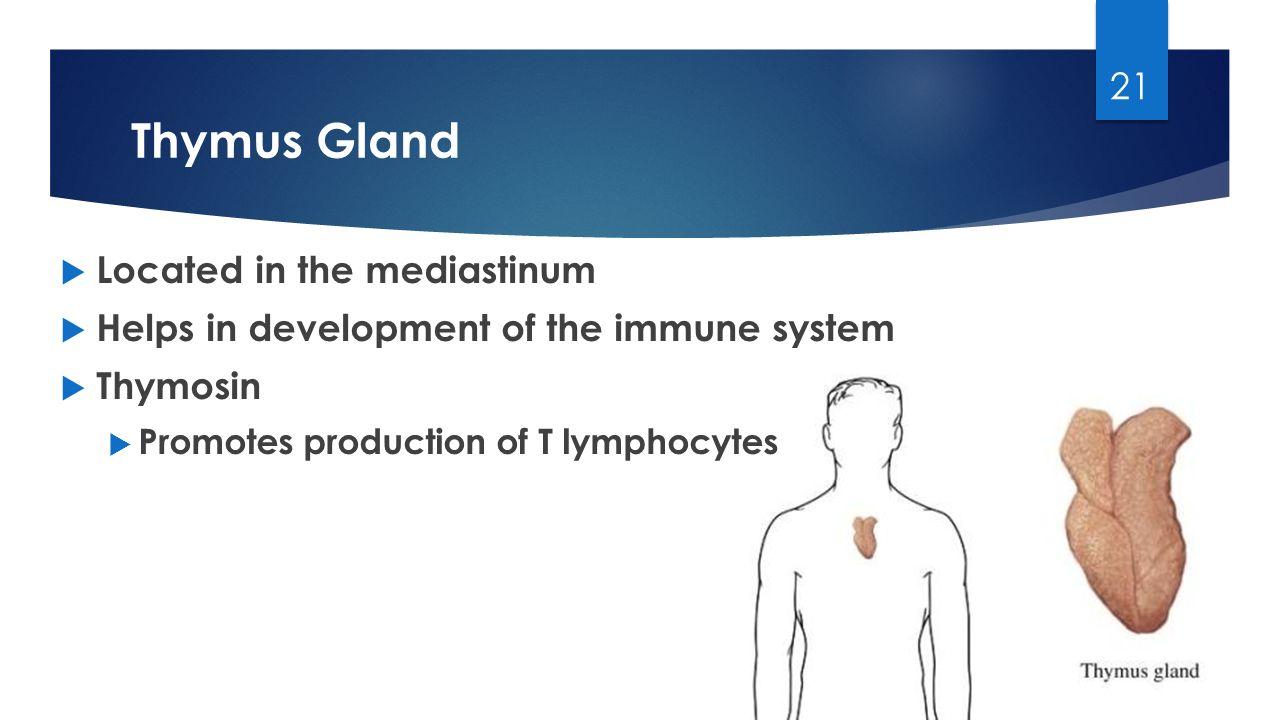 Homeostasis Aldosterone Thymus Gland Hyperglycemia - ppt video ...