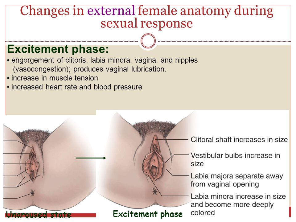Vaginal Bleeding: After Sex, Abnormal, During Pregnancy