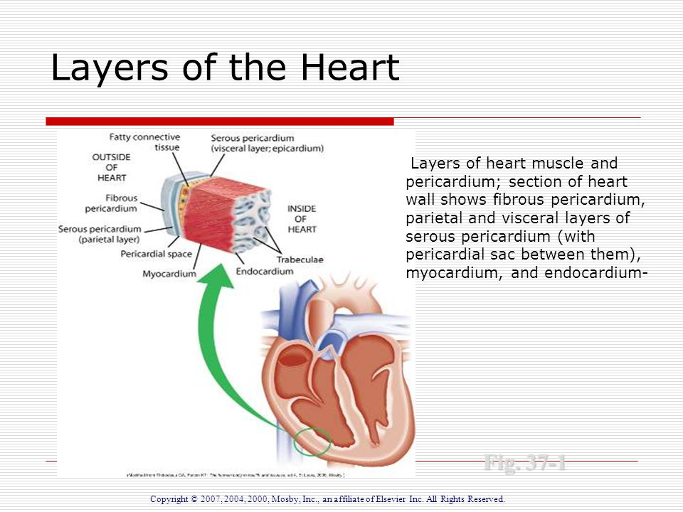 Inflammatory disorders of the heart ppt download 3 layers of the heart ccuart Image collections