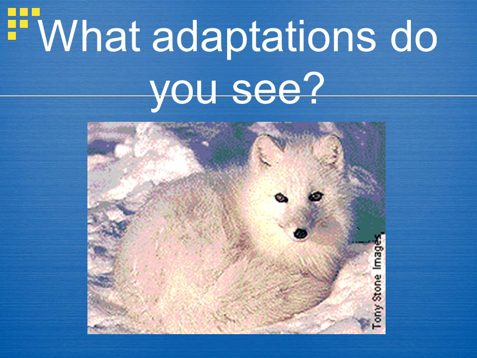 What adaptations do you see