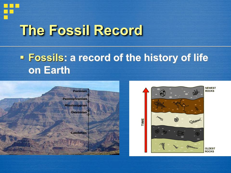 The Fossil Record Fossils: a record of the history of life on Earth