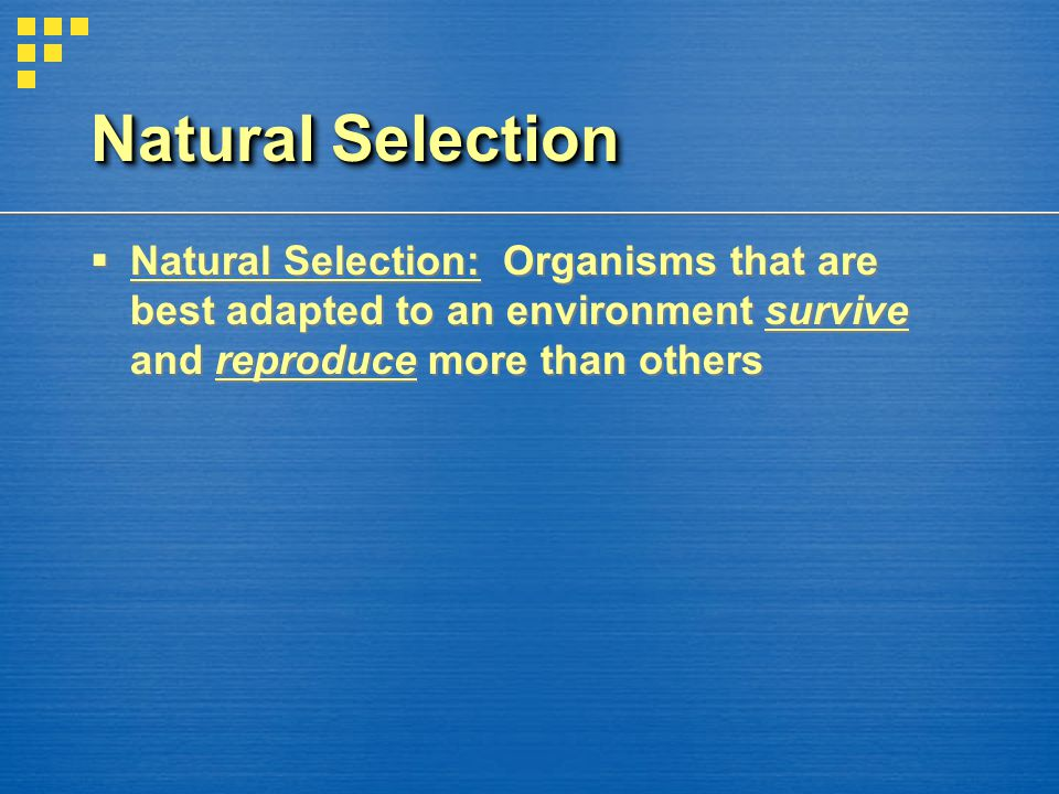 Natural Selection Natural Selection: Organisms that are best adapted to an environment survive and reproduce more than others.