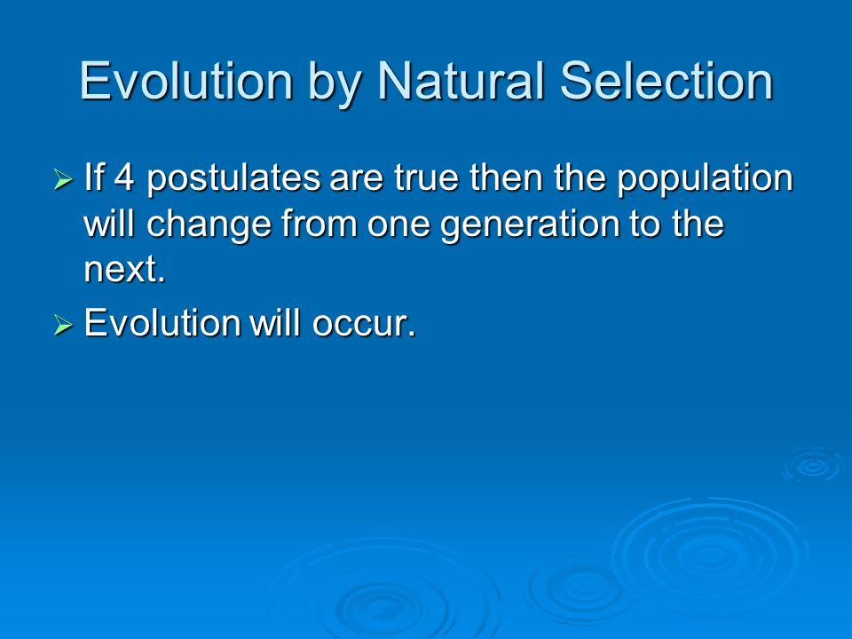 Natural Selection Fitness Adaptation