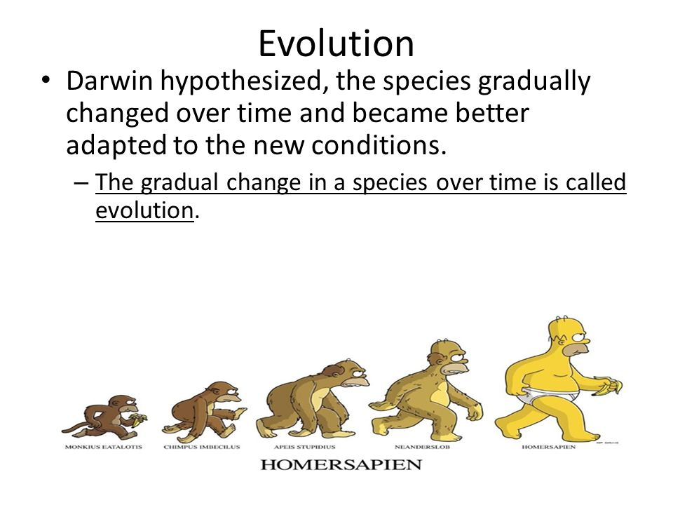Evolution Darwin hypothesized, the species gradually changed over time and became better adapted to the new conditions.