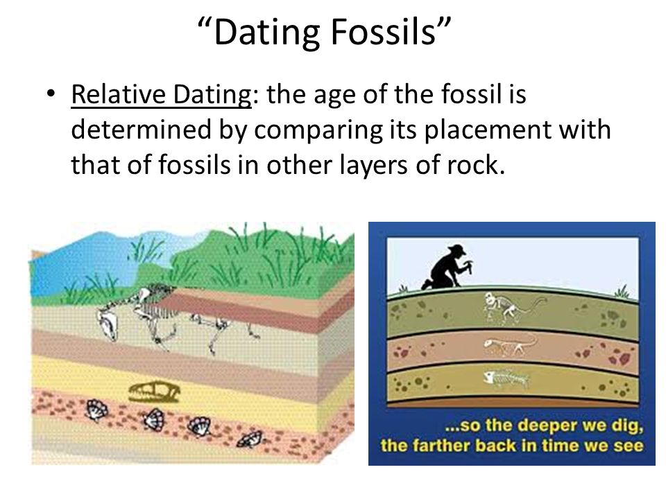 Dating Fossils Relative Dating: the age of the fossil is determined by comparing its placement with that of fossils in other layers of rock.