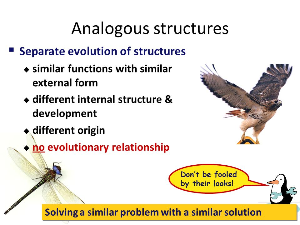 Analogous structures Separate evolution of structures