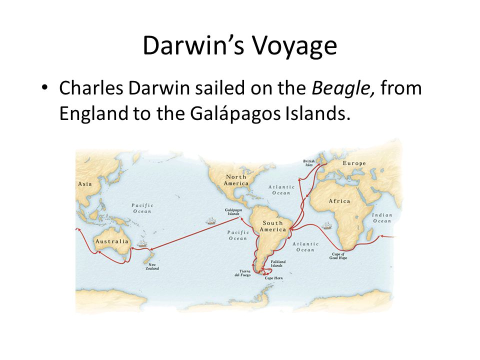 - Darwin's Theory Darwin's Voyage.