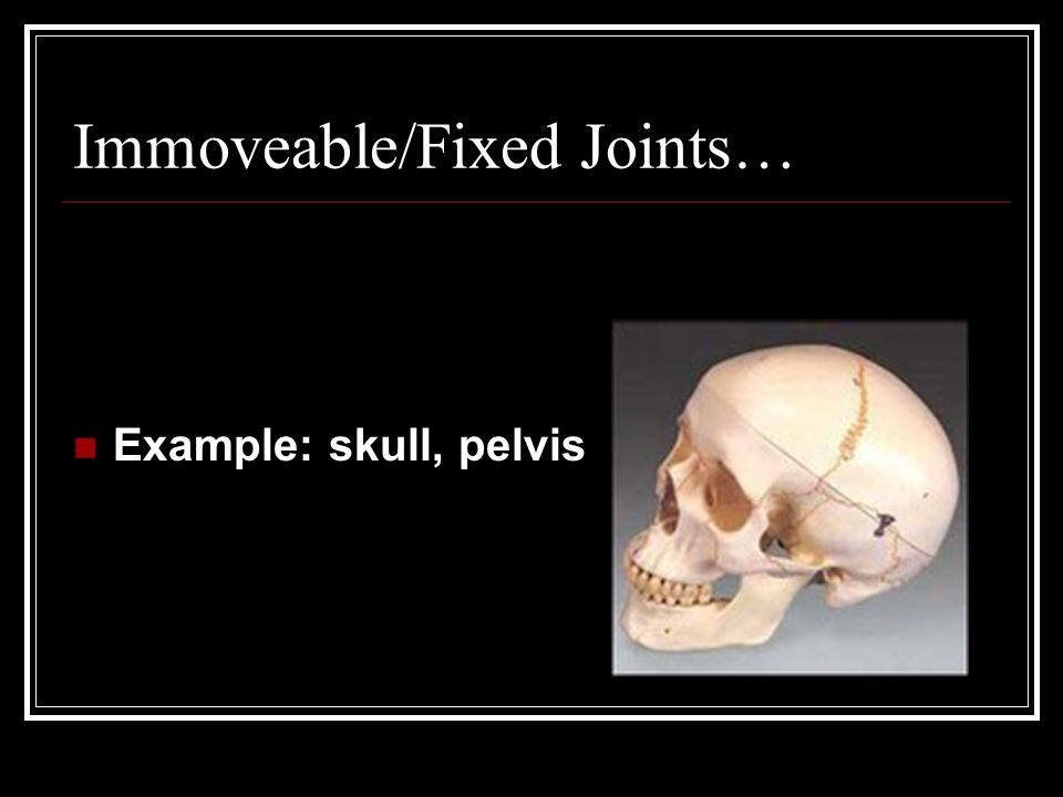 The Skeletal System No bones about it!. - ppt video online ...