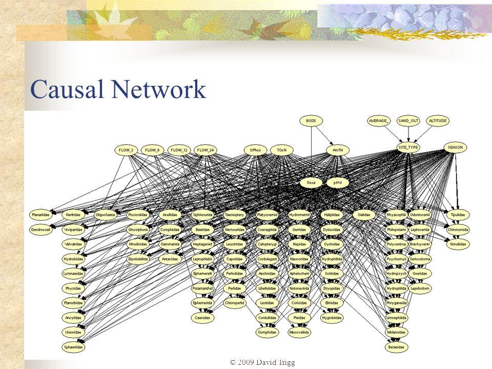 Causal Network © 2009 David Trigg