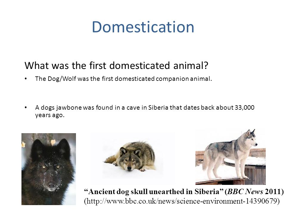 domestication Domestication in evolutionary terms – from darwin to the present day it is well-known that darwin has focused much attention on domestication as the process during which striking variation arises.