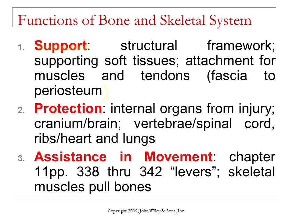 The Skeletal System Bone Tissue Chapter 6 Ppt Video Online Download