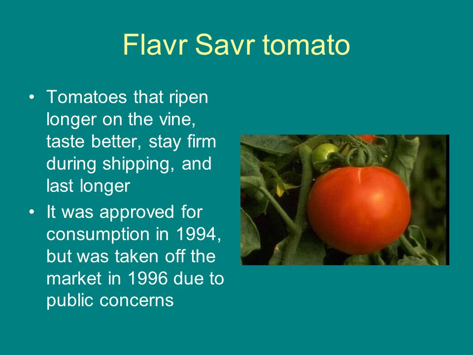 Flavr Savr tomato Tomatoes that ripen longer on the vine, taste better, stay firm during shipping, and last longer.