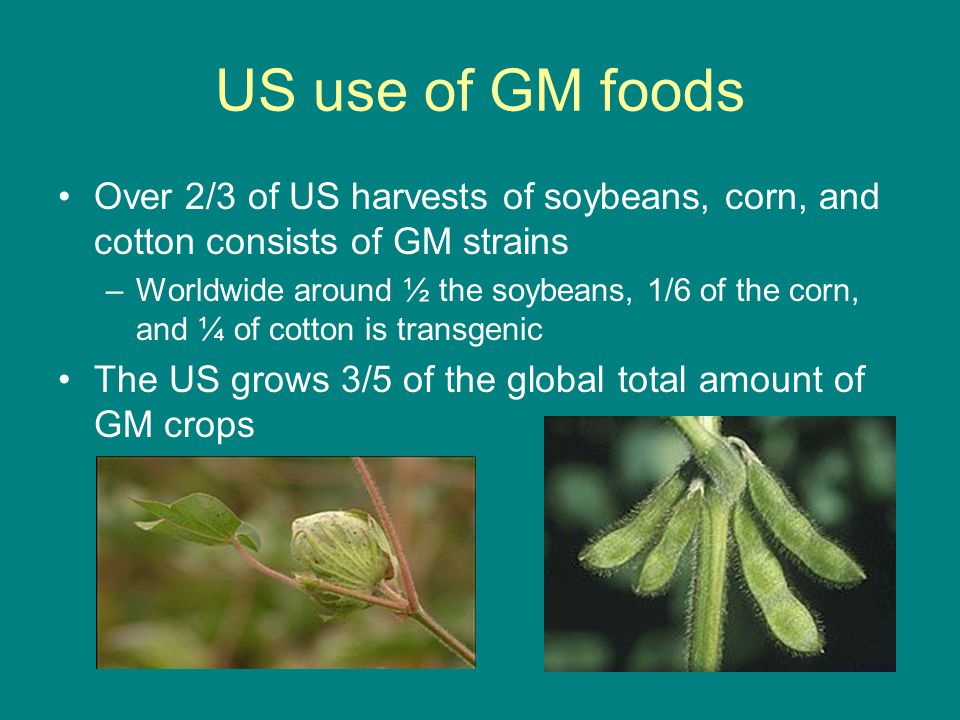 US use of GM foods Over 2/3 of US harvests of soybeans, corn, and cotton consists of GM strains.