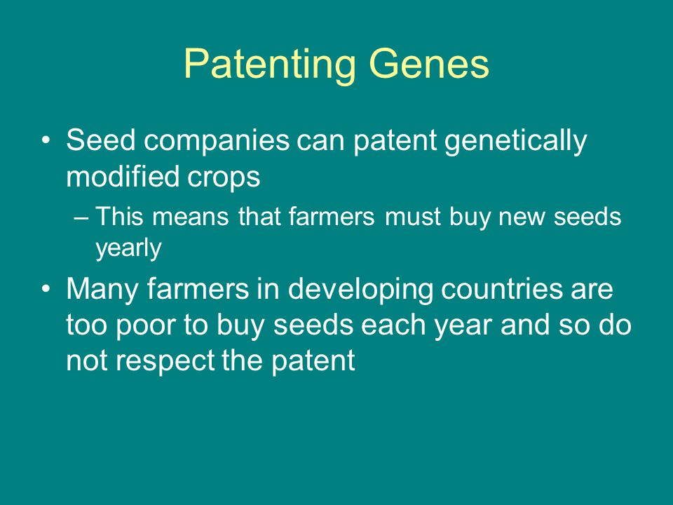 Patenting Genes Seed companies can patent genetically modified crops