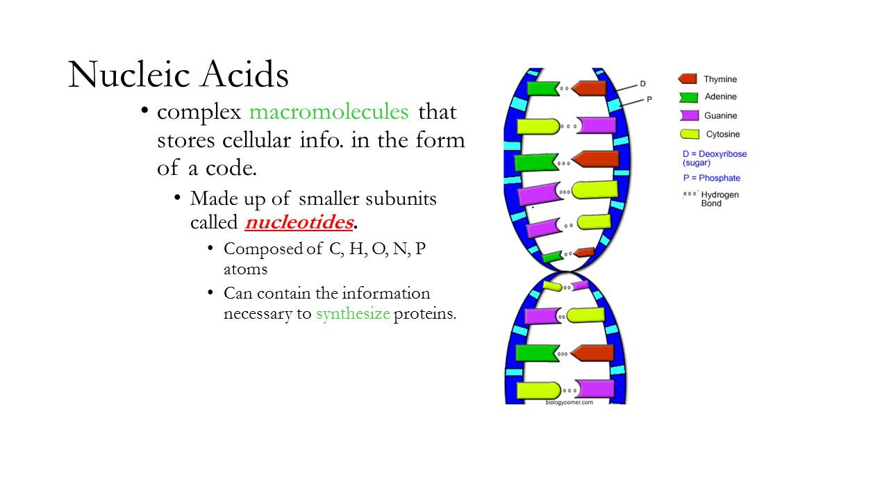proteins and nucleic acids Fun science practice improve your skills with free problems in 'structure and function: carbohydrates, lipids, proteins, and nucleic acids' and thousands of.