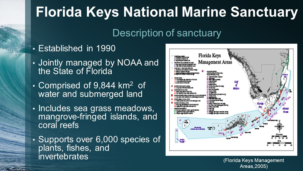 Marine pollution in the florida keys national marine sanctuary 3 florida nvjuhfo Image collections