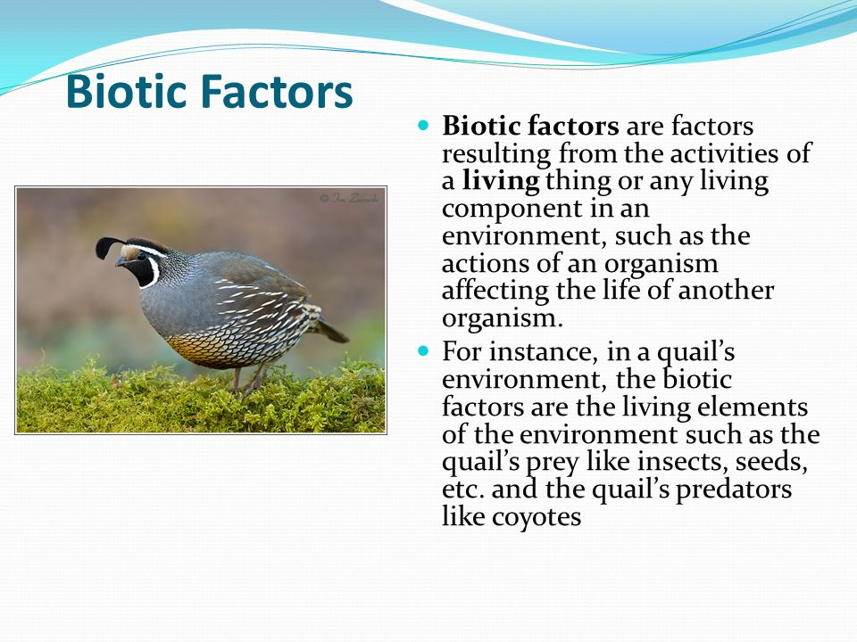 factors affecting biotic and abiotic features environment Factors affecting the biotic and abiotic features in the environment factors affecting the role that the relationships between biotic and abiotic factors contribute to the relationship between foliage and ground coverby effie l ie lucasintroduction:a functioning ecosystem is totally reliant on the way in which factors such as biotic.