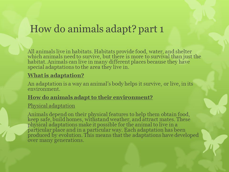 animals adapt environment they live They also have few  birds that live in grasslands  what are some specific examples of the ways that animals adapt to their environment animals similar.