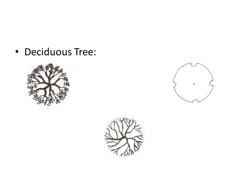 how to draw a deciduous tree