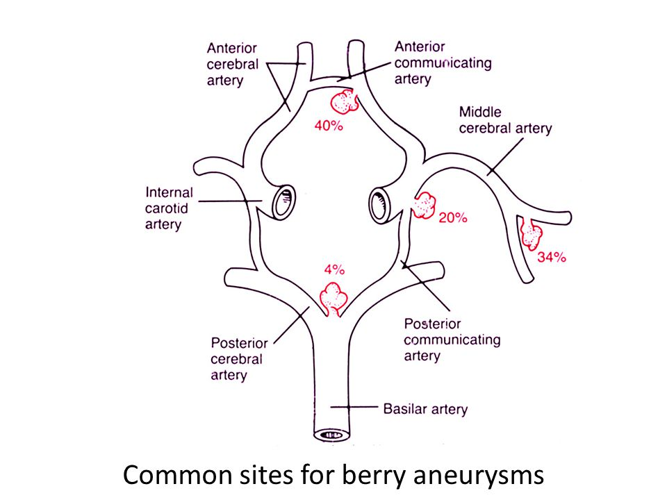 5666188 likewise Fetal Circulation 47393691 also 3525505 together with Diagram Of Circulatory System For Kids likewise Circulatory System Facts. on blood circulatory system ppt
