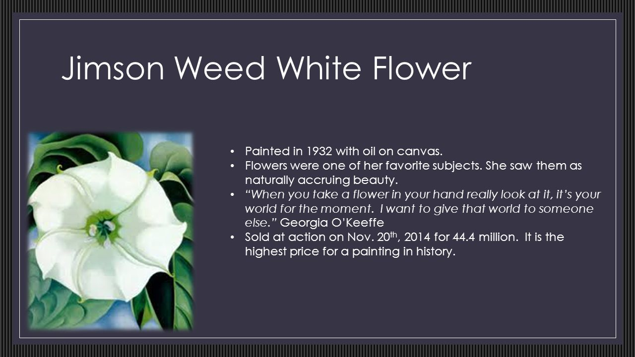 Georgia okeeffe by ellayoungblood ppt video online download jimson weed white flower mightylinksfo