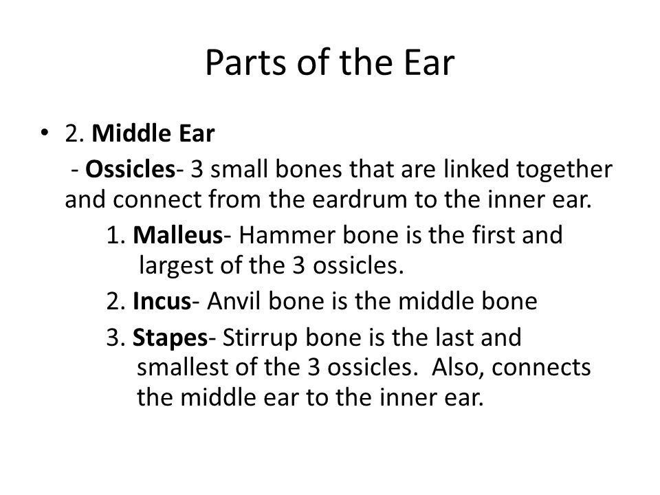 Parts of the Ear 2. Middle Ear
