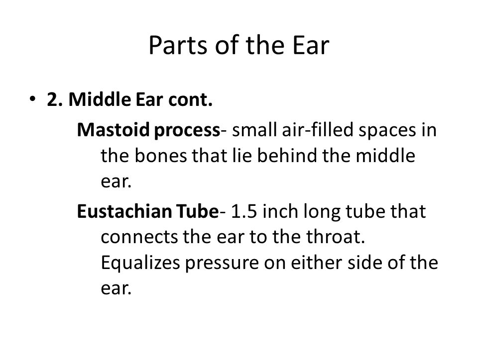 Parts of the Ear 2. Middle Ear cont.