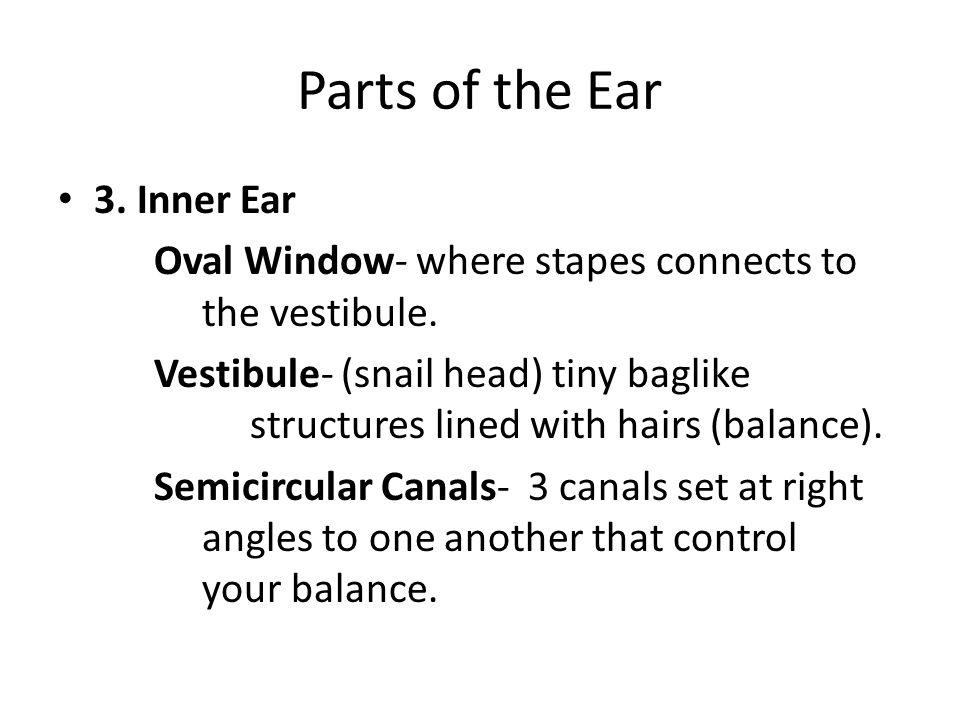 Parts of the Ear 3. Inner Ear