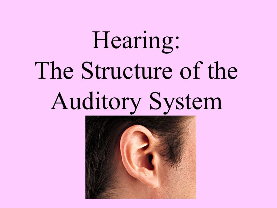 Hearing: The Structure of the Auditory System