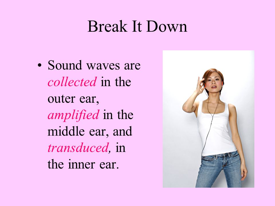 Break It Down Sound waves are collected in the outer ear, amplified in the middle ear, and transduced, in the inner ear.