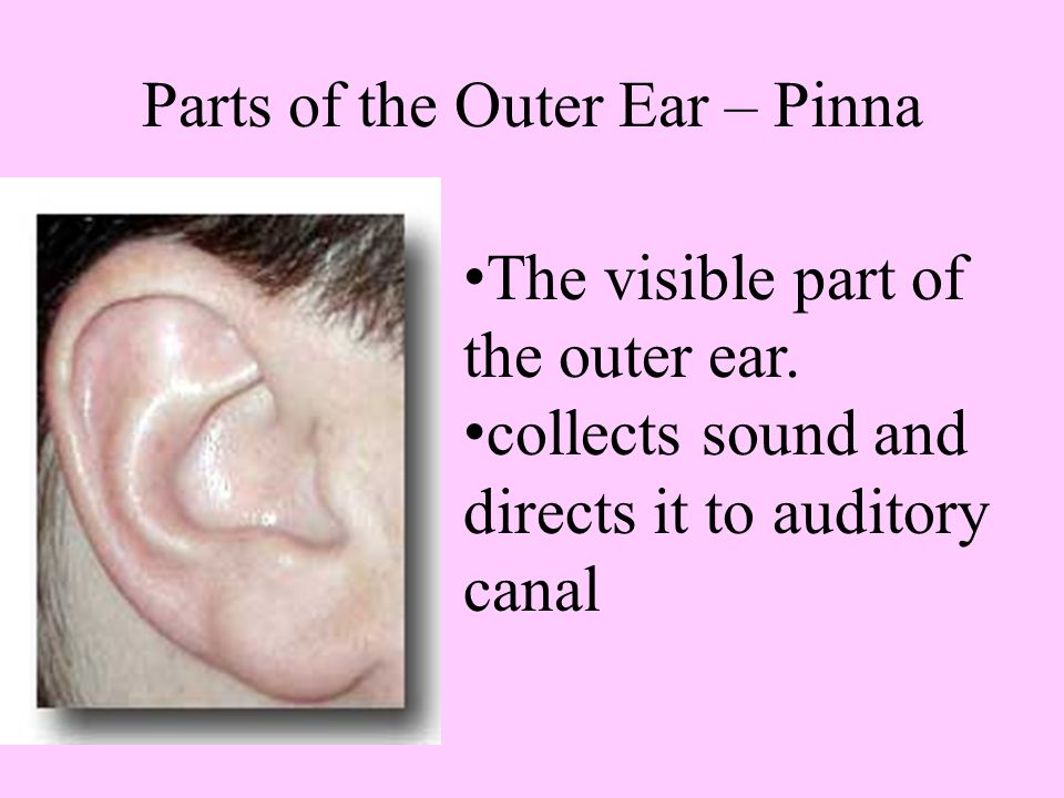 Parts of the Outer Ear – Pinna