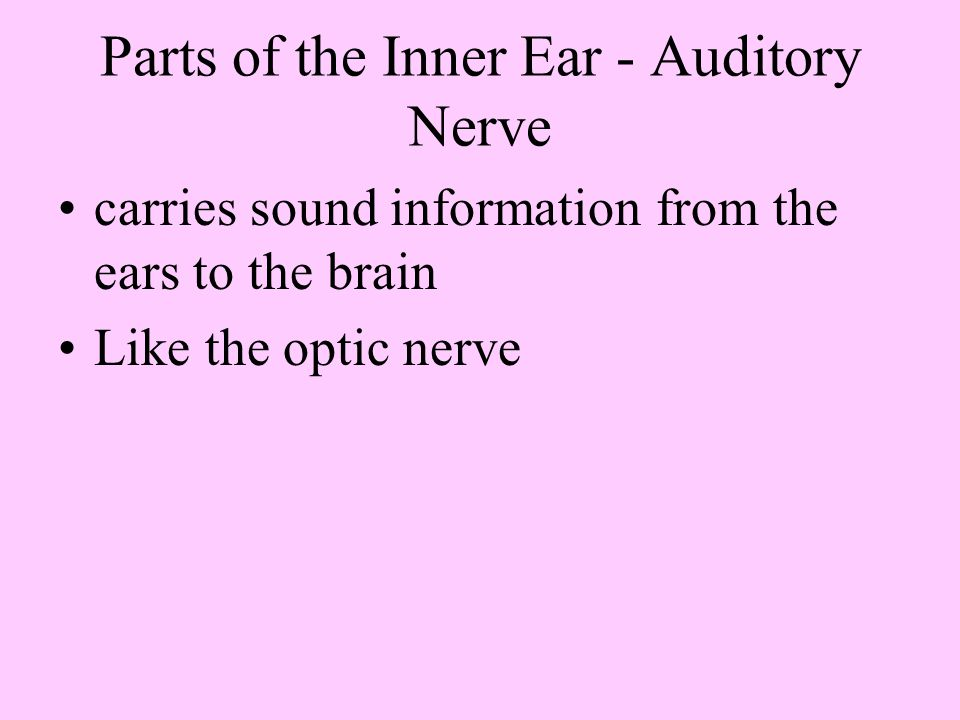 Parts of the Inner Ear - Auditory Nerve
