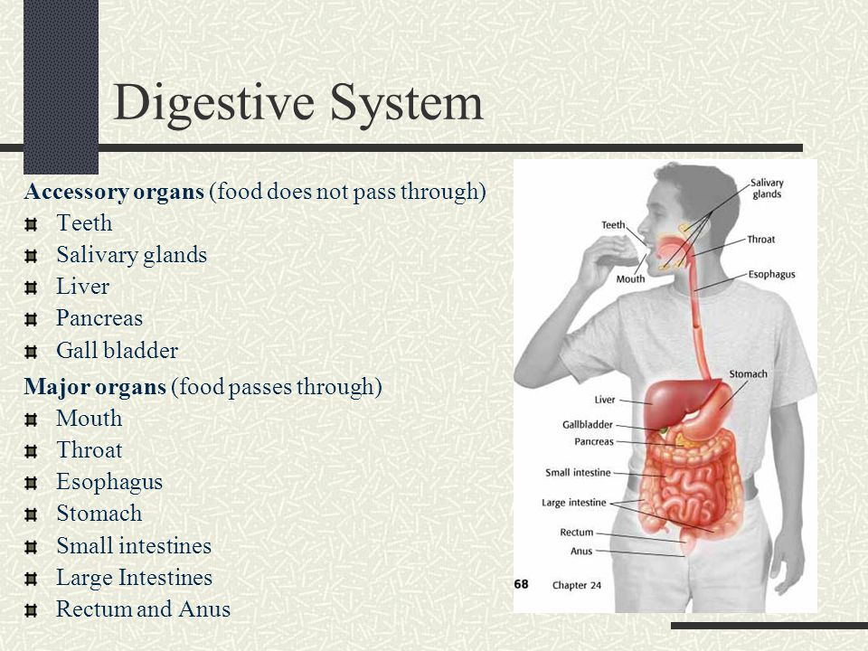 16 Really Simple Effective Ways Digestive System Major Organs