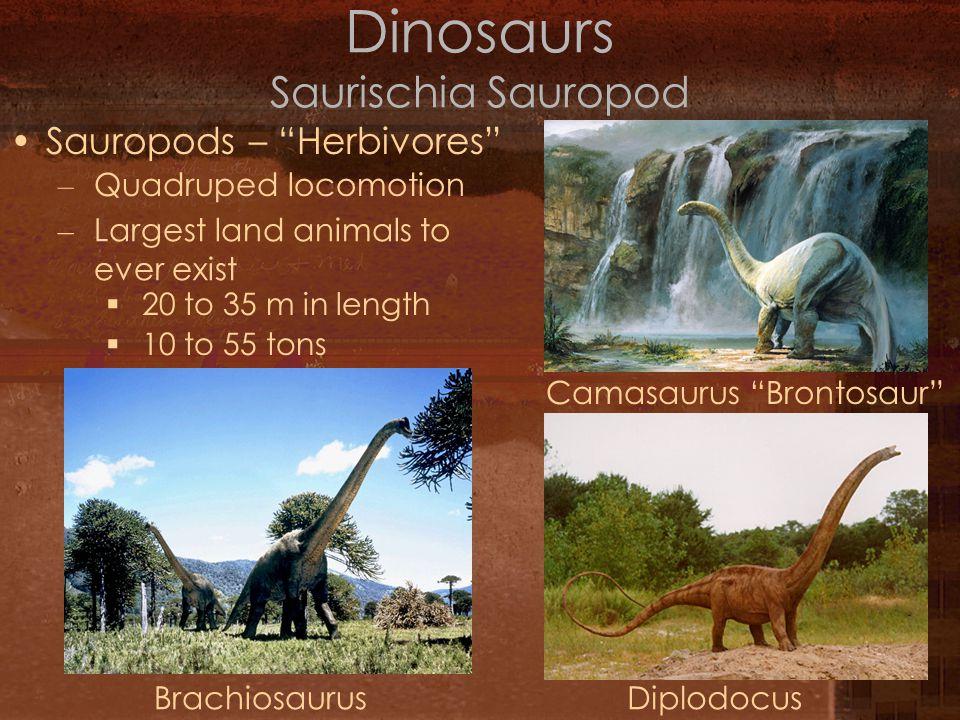 Mesozoic Era Life Ppt Video Online Download