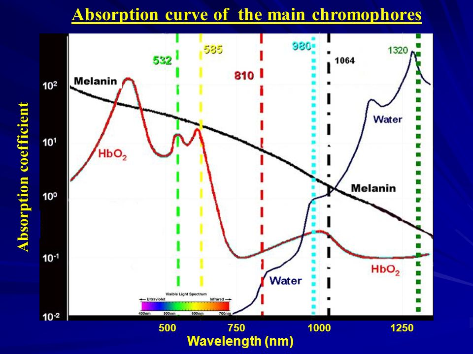 Absorption curve of the main chromophores