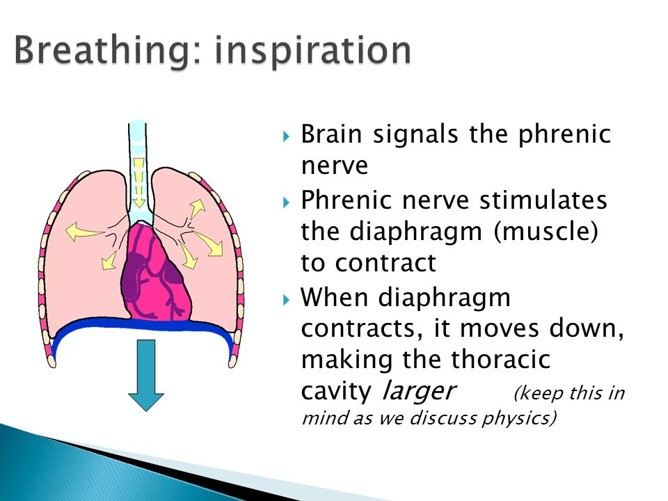 Managing Chest Drainage Ppt Video Online Download