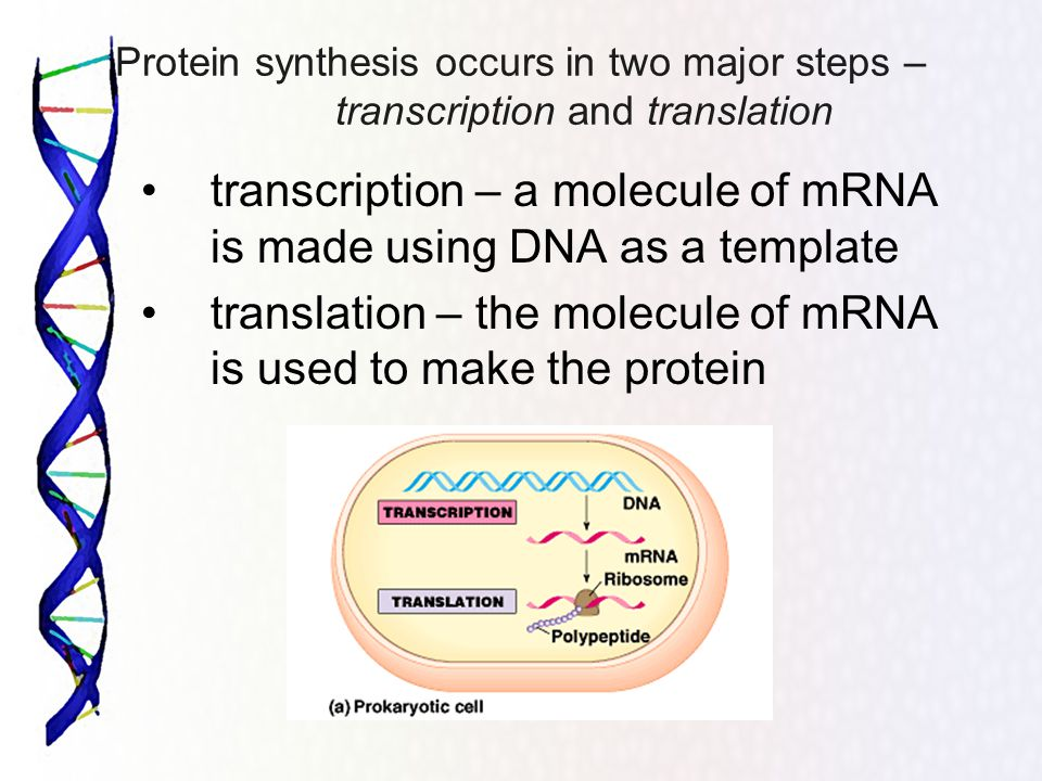 Protein synthesis the genetic code the sequence of for What is a template in dna
