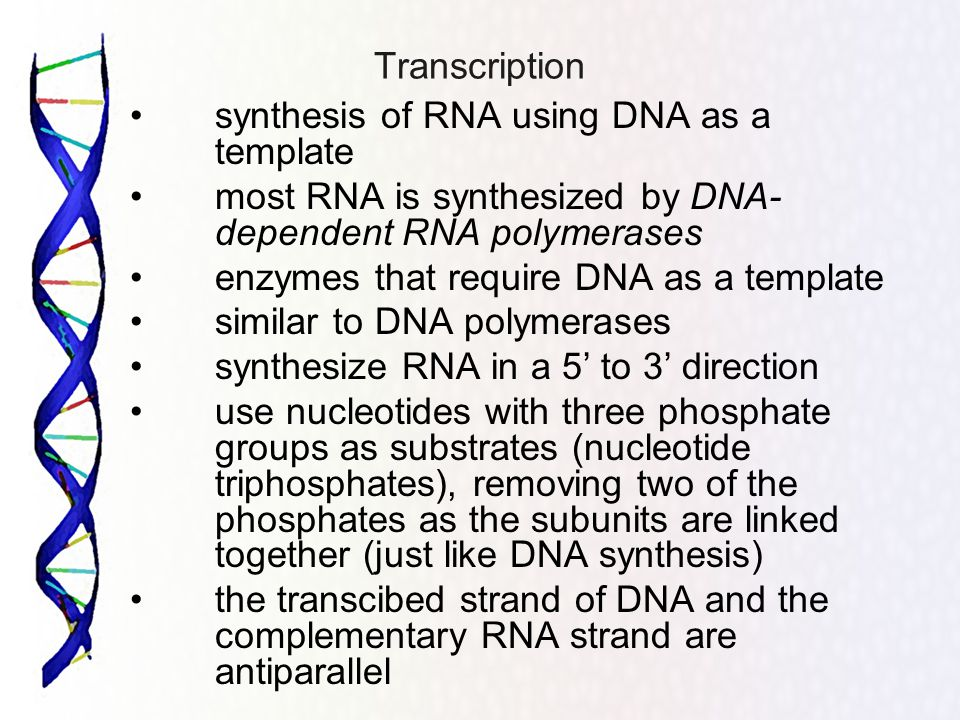 Transcription synthesis of RNA using DNA as a template. most RNA is synthesized by DNA-dependent RNA polymerases.