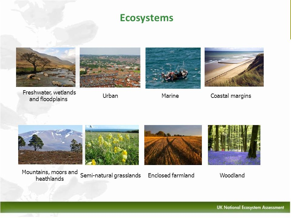 Ecosystems Freshwater, wetlands and floodplains Urban Marine
