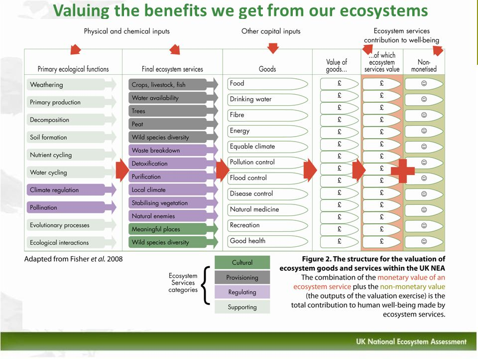 Valuing the benefits we get from our ecosystems