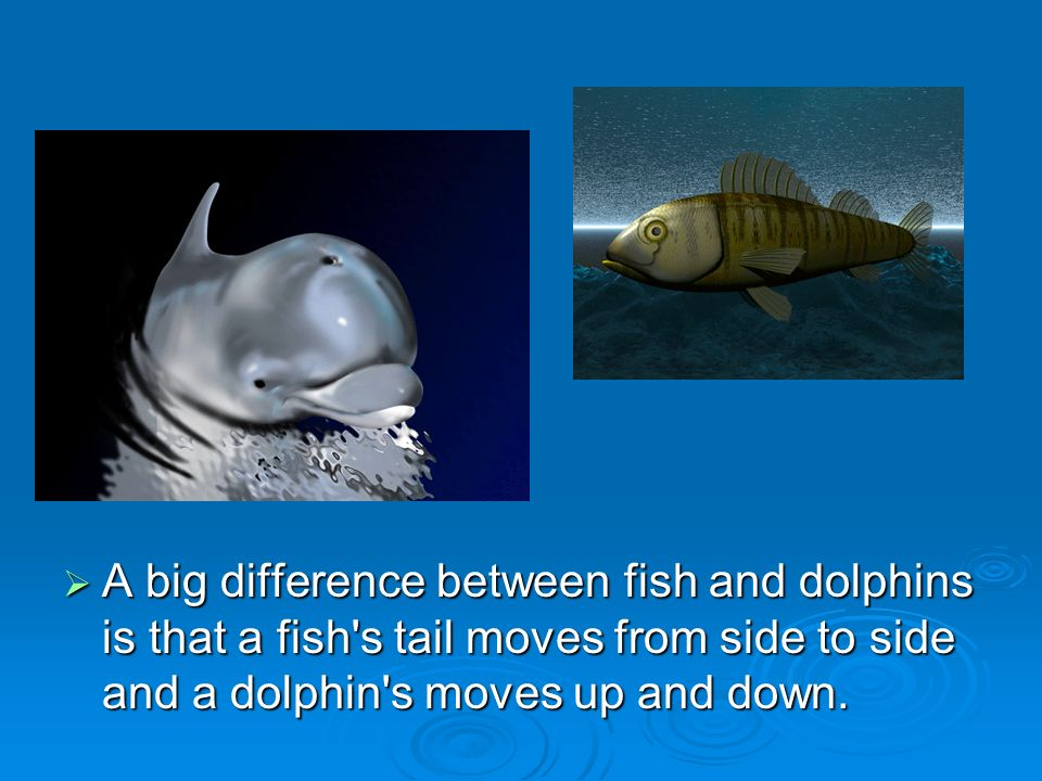 Aquatic biomes ppt download for Is a dolphin a fish