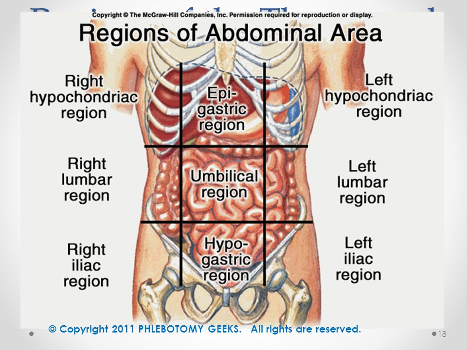 a report on the abdominal cavity of the human body Organ+systems+and+body+cavities+abdominal+cavity - download as b5 abdominopelvic cavity divide the abdominopelvic cavity of a human torso into quadrants.
