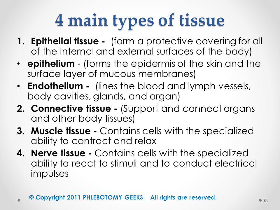 main tissues in the body and Connective tissue: a material made up of fibers forming a framework and support  structure for body tissues and organs connective tissue surrounds many.
