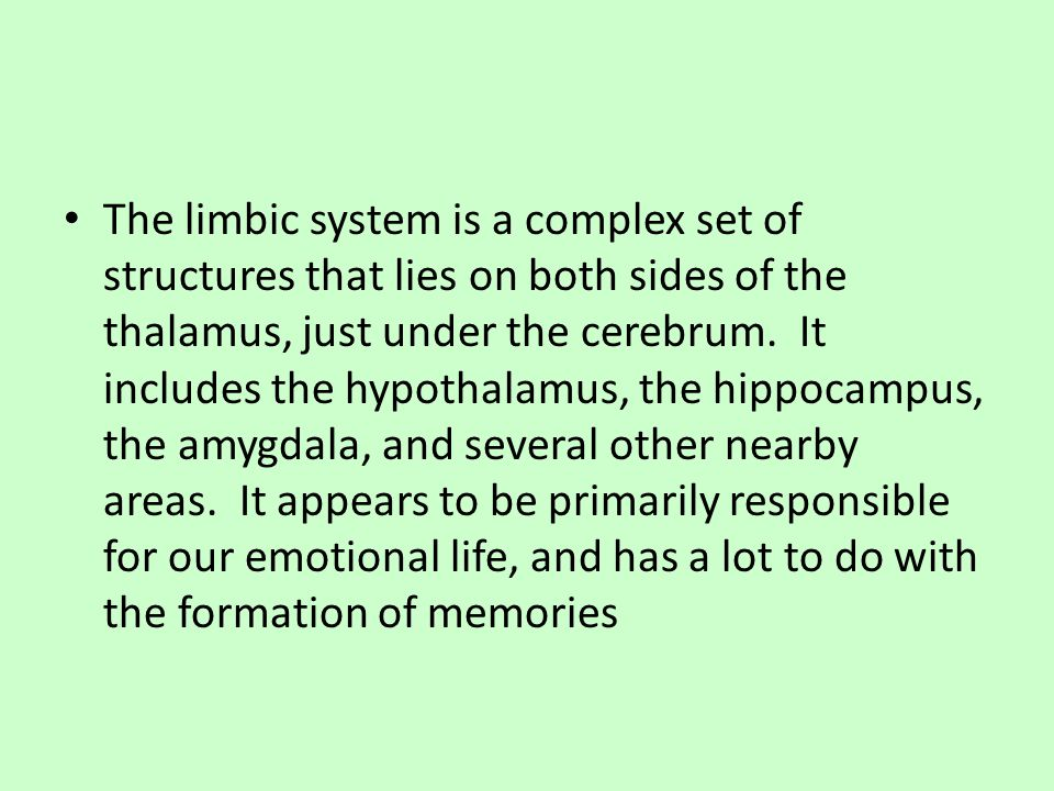 The limbic system is a complex set of structures that lies on both sides of the thalamus, just under the cerebrum. It includes the hypothalamus, the hippocampus, the amygdala, and several other nearby areas. It appears to be primarily responsible for our emotional life, and has a lot to do with the formation of memories