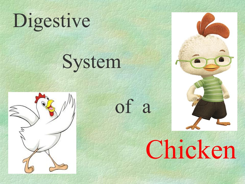 Digestive system of a chicken ppt video online download 1 digestive system of a chicken ccuart Choice Image