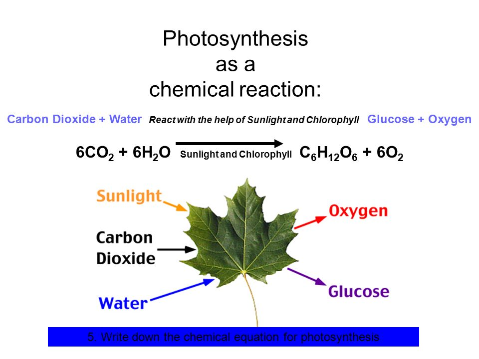 What Is the Overall Reaction for Photosynthesis?