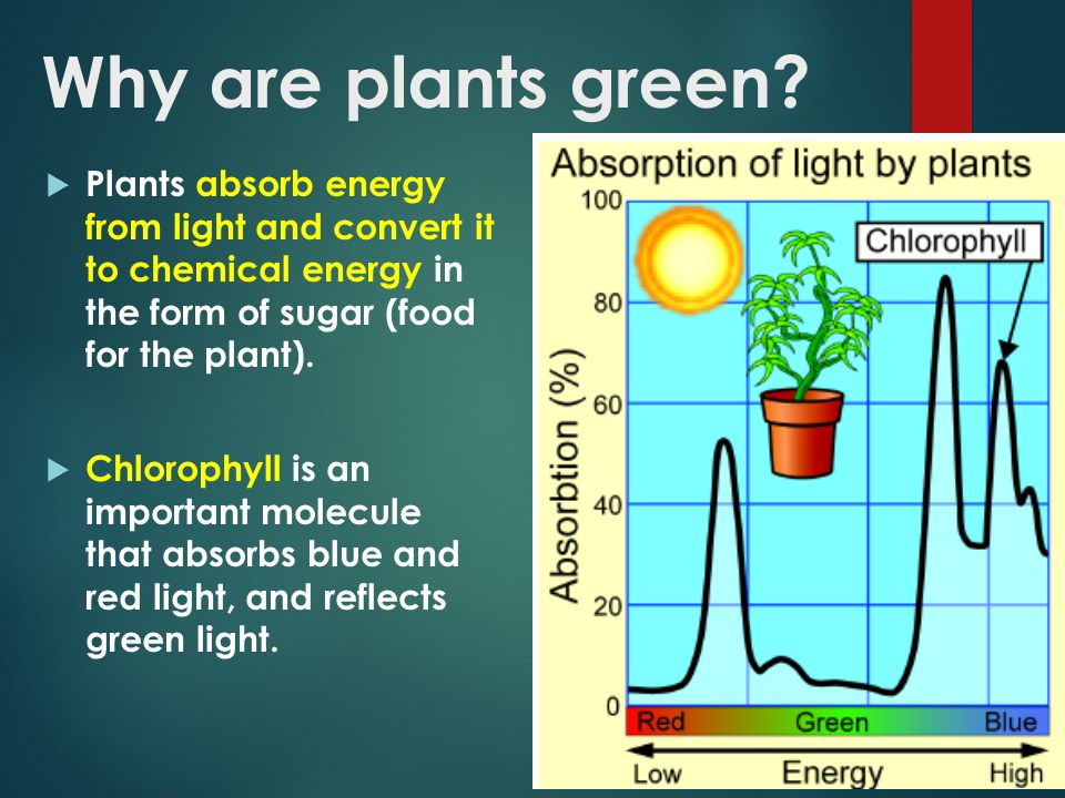 colors of light (wavelengths) absorbed by green plants essay Objects appear different colours because they absorb some colours (wavelengths) the primary colours of light are red, green color-visionhtml make a colour.